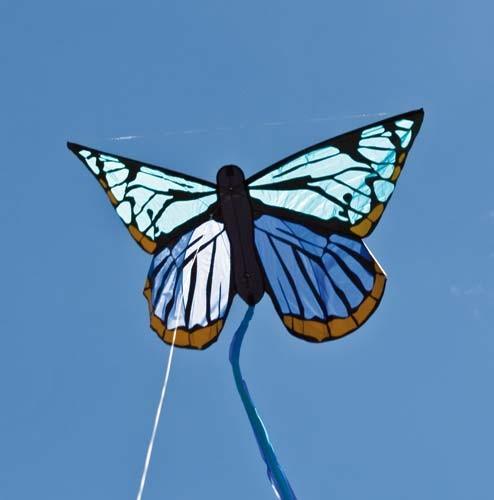 Schmetterling / Butterfly Stalachtis, Einleiner von Invento-HQ (130 x 80 cm) - R2F